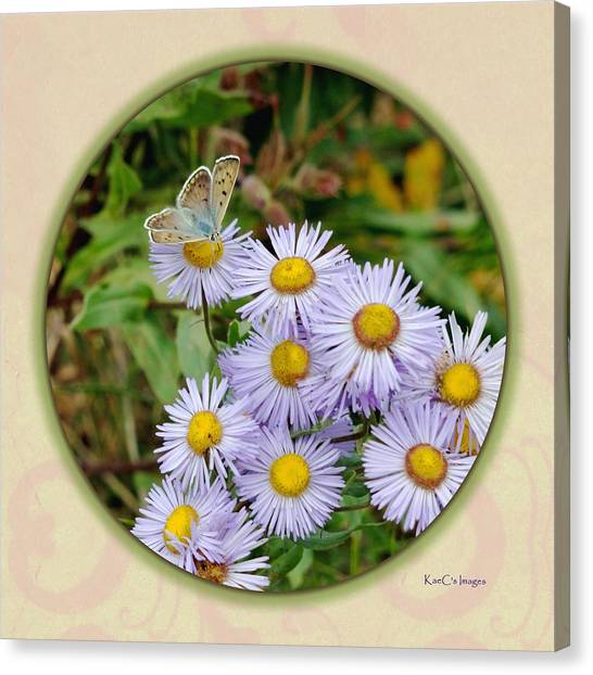 Purplish Copper On Wild Asters Canvas Print