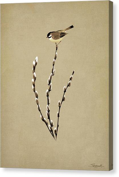 Pussy Willow And Chickadee Canvas Print