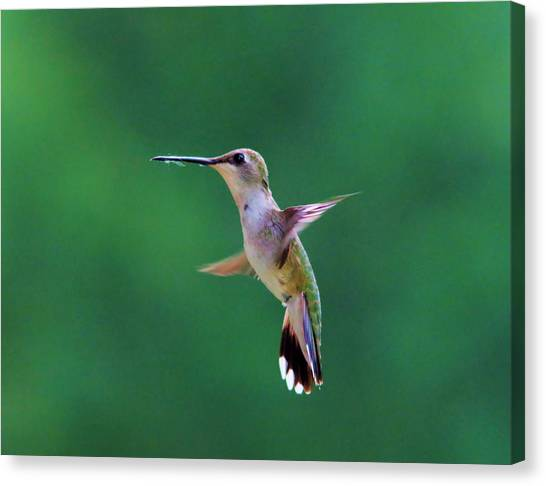 Little Things Canvas Print - Putting On The Brakes  by Jeff Swan