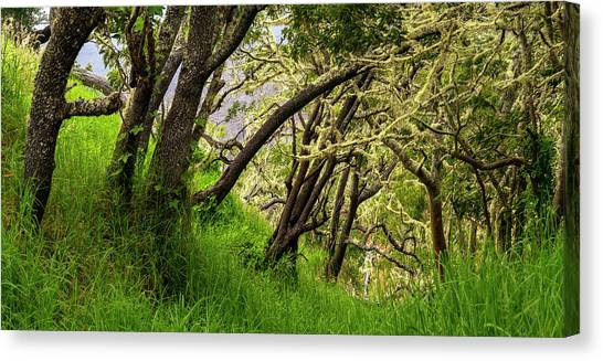 Mauna Loa Canvas Print - Pu'u Huluhulu Forest by Christopher Johnson