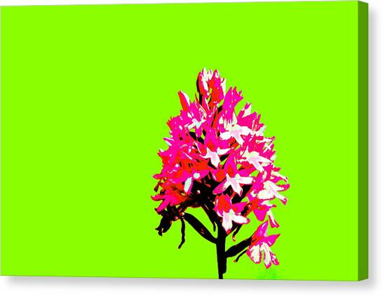 Green Pyramid Orchid Canvas Print