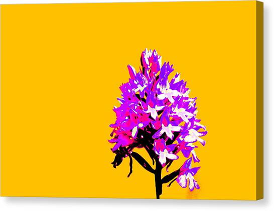 Orange Pyramid Orchid  Canvas Print