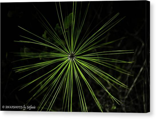 Pyrotechnics Or Pine Needles Canvas Print