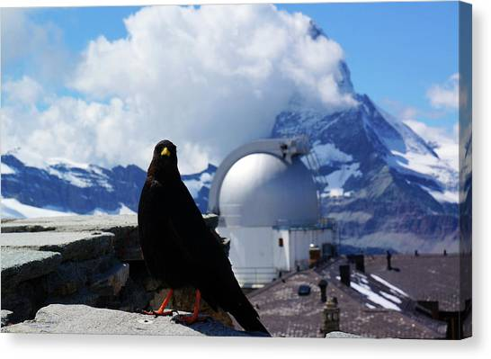 Matterhorn Canvas Print - Pyrrhocorax Graculus And Matterhorn by Kurick Berry