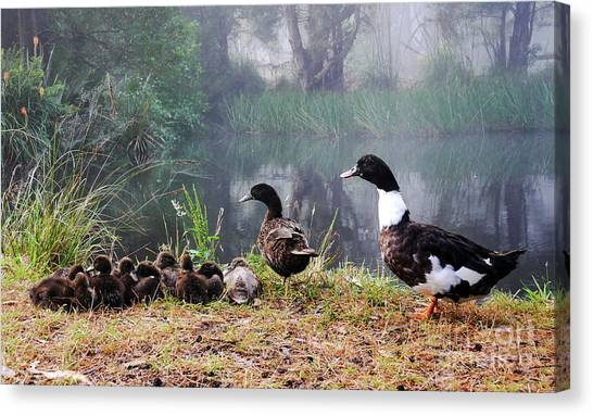 Quack Quack Ducks And A Pond Canvas Print