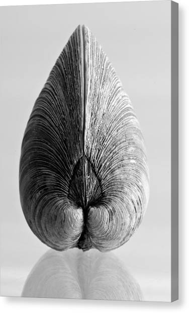 Quahog Number 1 Canvas Print by Henry Krauzyk