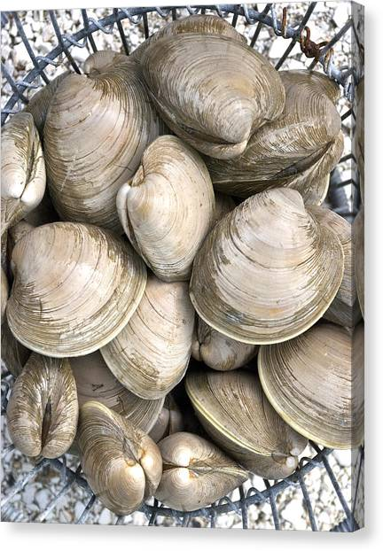 Clams Canvas Print - Quahogs by Charles Harden