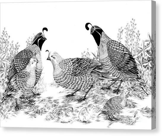 Quail Family Reunion Canvas Print