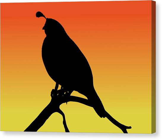 Quail Silhouette At Sunset Canvas Print
