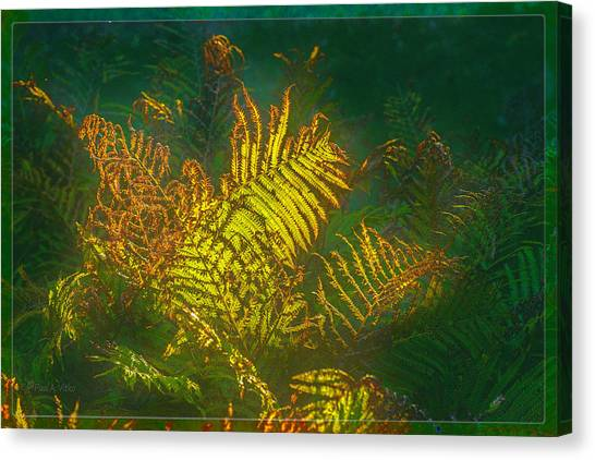 Quantum Fern.... Canvas Print