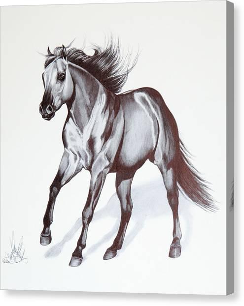Quarter Horse At Lope Canvas Print