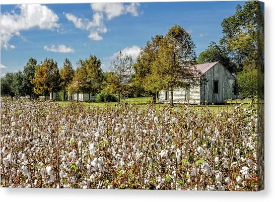 Quarters Viewed From Cotton Field - Frogmore Plantation Canvas Print