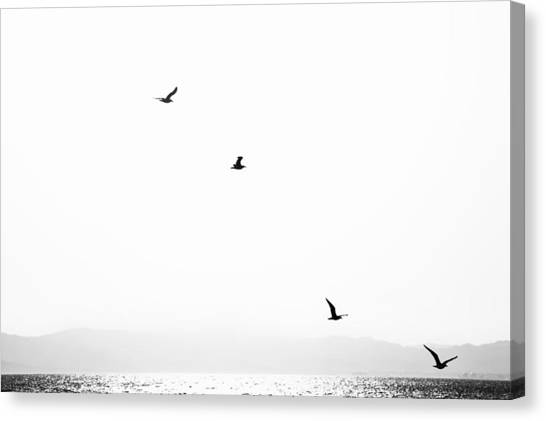 Sea Birds Canvas Print - Quartet by Hayato Matsumoto