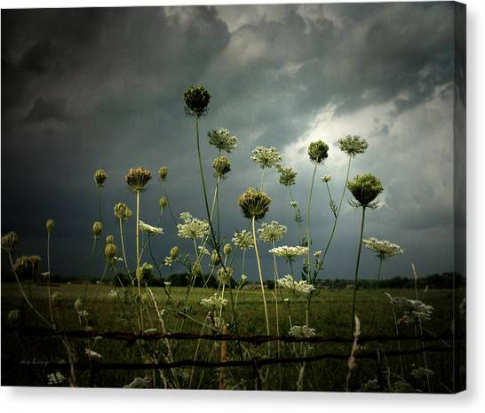 Queen Anne's Lace 3 Canvas Print