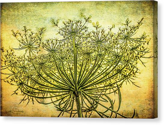 Queen Anne's Lace At Sunrise Canvas Print