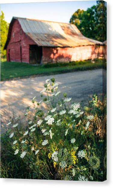 Queen Anne's Lace By The Barn Canvas Print