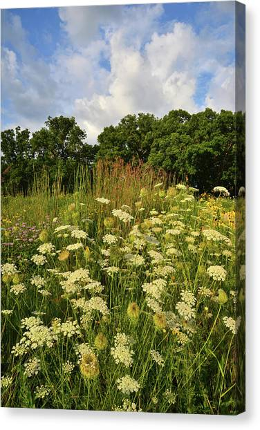Prairie Sunrises Canvas Print - Queen Anne's Lace In Lost Valley by Ray Mathis