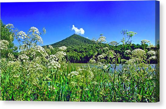 Queen Anne's Lace, Peaks Of Otter  Canvas Print