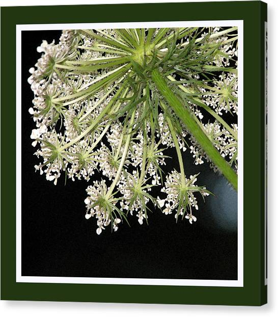 Canvas Print - Queen Anne's Umbrella by Ginger Howland