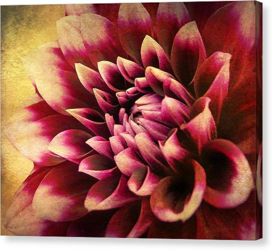 Queen Dahlia Canvas Print