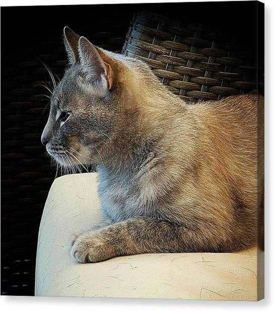 Queen Of All She Surveys Canvas Print