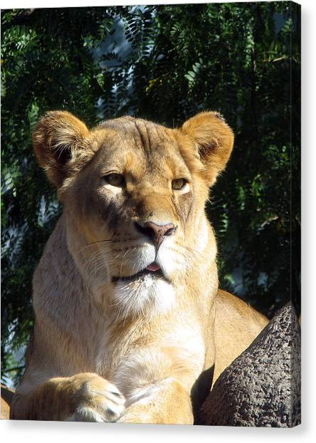 Queen Of The Beasts Canvas Print