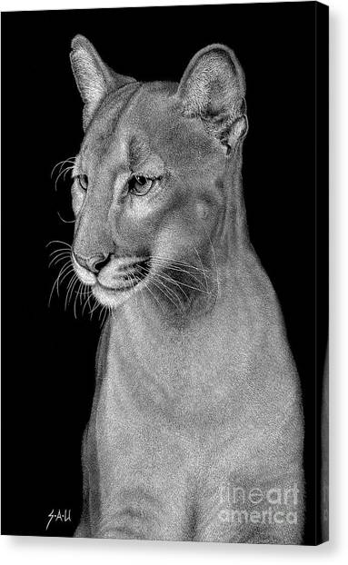 Florida Panthers Canvas Print - Queen Of The Everglades by Sheryl Unwin