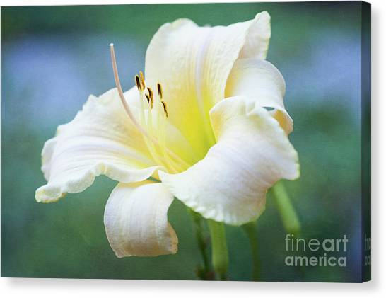 Queen Of The Garden Canvas Print