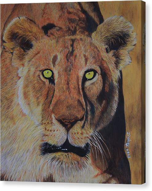 Queen Of The Jungle Canvas Print by Don MacCarthy