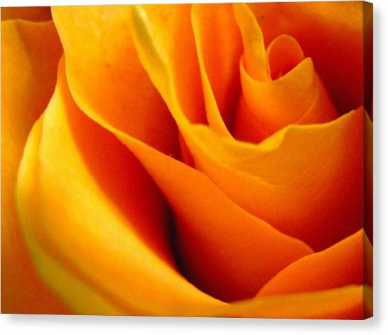 Queen Rose Canvas Print