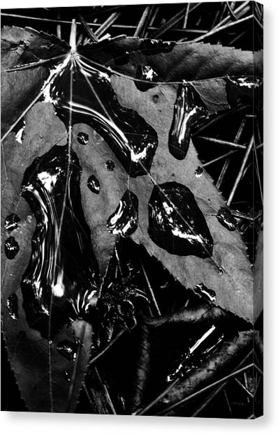 Quick Silver Canvas Print by Tony Marquez