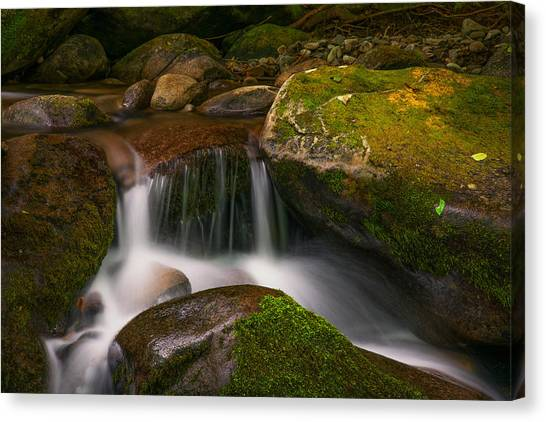 Quiet Beauty Canvas Print
