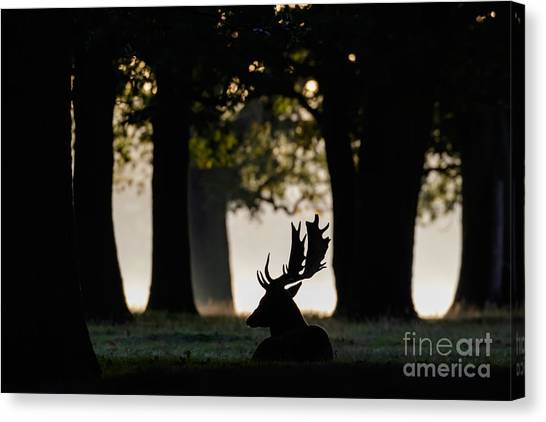 Quiet Copse Canvas Print