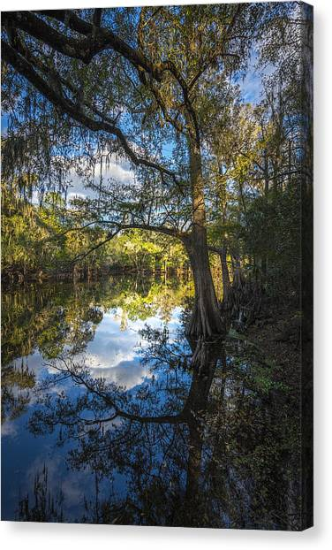 Ibis Canvas Print - Quiet Embrace by Marvin Spates