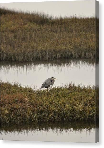 Quiet Heron Canvas Print