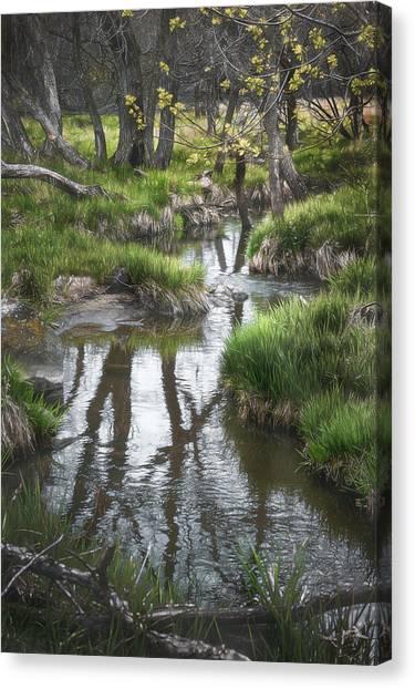 Wetlands Canvas Print - Quiet Stream by Scott Norris