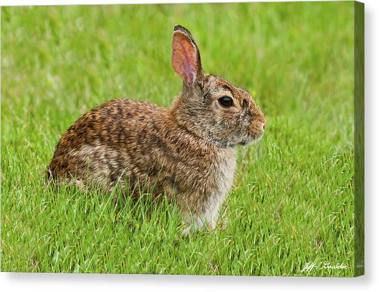 Rabbit In A Grassy Meadow Canvas Print