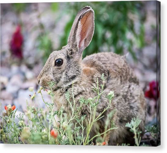 Canvas Print featuring the photograph Rabbit Munching Lunch by John Brink