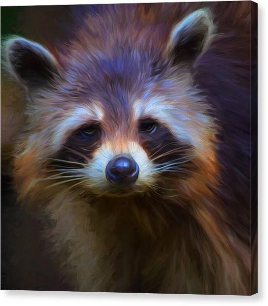 Raccoons Canvas Print - Raccoon by Cindy Grundsten