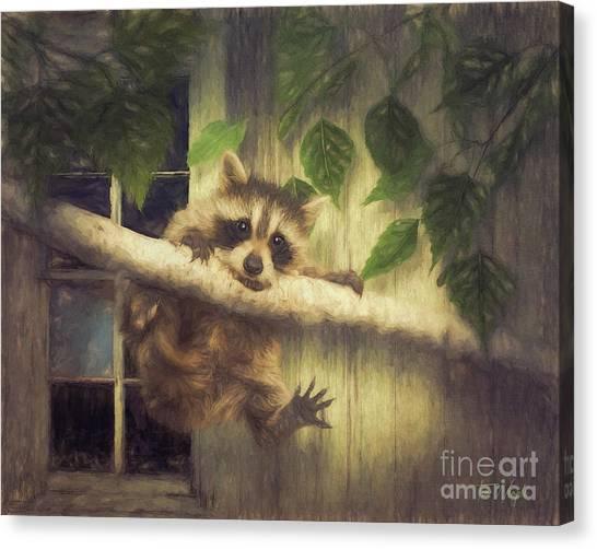 Raccoon Hangin' Around Canvas Print by Tim Wemple