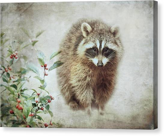 Raccoons Canvas Print - Raccoon In Winterberry by Susan Capuano