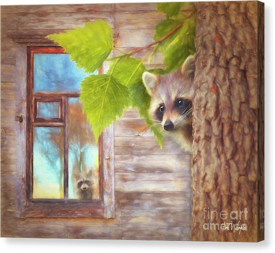 Raccoon Lookout Canvas Print by Tim Wemple