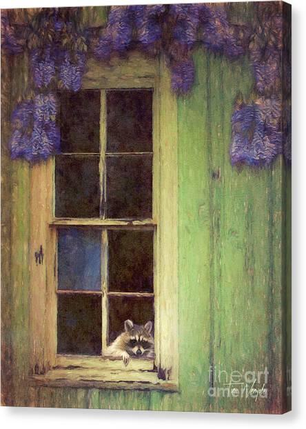Raccoon Window Canvas Print by Tim Wemple