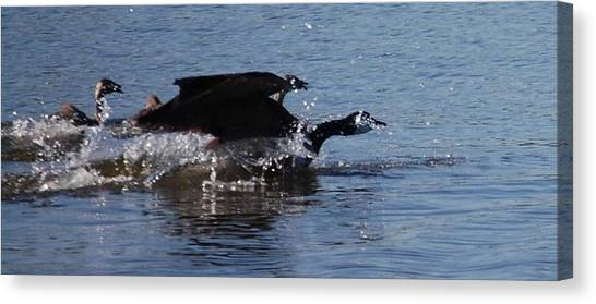 Racing Geese Canvas Print