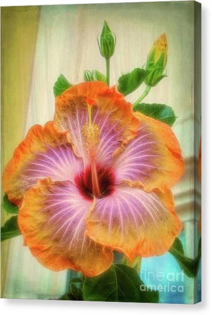 Radiant Hibiscus Canvas Print