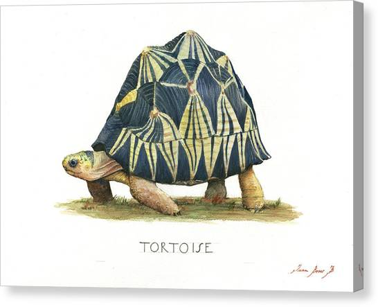 Turtles Canvas Print - Radiated Tortoise  by Juan Bosco