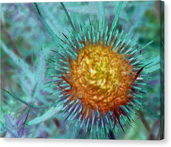 Radon Flower Canvas Print by Mark Stevenson
