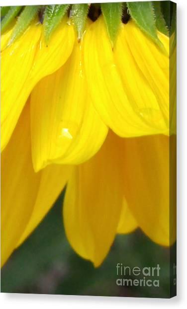 Rain And Sunshine On A Colorado Wildflower Canvas Print