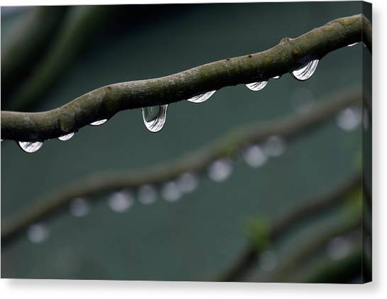 Rain Canvas Print - Rain Branch by Photography by Gordana Adamovic Mladenovic