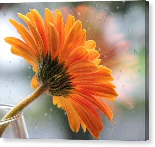 Rain Drops At My Window Canvas Print